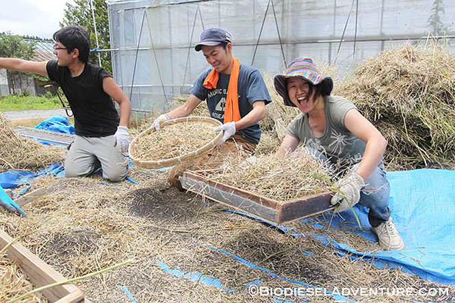 菜の花大地復興プロジェクト